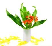 花和叶子花束  图库摄影