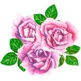花和叶子,贺卡的手画水彩花束组合,隔绝在白色背景 库存照片
