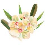 花和叶子,贺卡的手画水彩花束组合,隔绝在白色背景 免版税库存照片