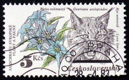 花和天猫座,大约1983年 库存照片