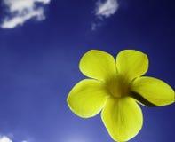 花和天空与云彩 免版税库存图片