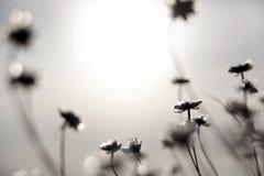 花和太阳 免版税库存图片