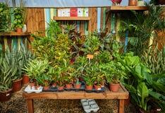 花和室内植物自温室在冬天 免版税库存图片