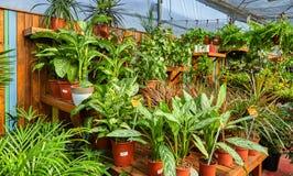 花和室内植物自温室在冬天 图库摄影