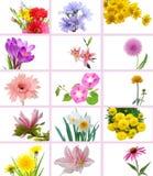花和庭院 库存图片