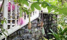 花和庭院kodaikkanal的 免版税库存图片