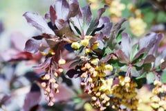 花和收集蜂蜜的蜂 免版税库存图片