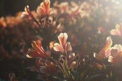 花和早晨 库存图片