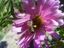 花和昆虫在我的庭院里 图库摄影