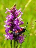 花和昆虫 免版税库存照片