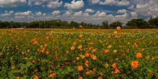 花和明亮的天空全景视图  免版税库存照片