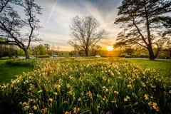 花和树在日落,在Cylburn树木园,在巴尔的摩, 免版税库存图片