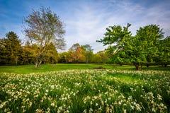 花和树在Cylburn树木园,在巴尔的摩,马里兰 免版税库存图片