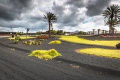 花和棕榈树在环形交通枢纽在Yaiza村庄, Lanzaro附近 库存图片
