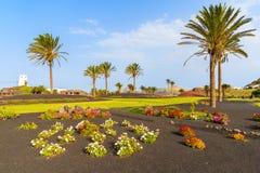 花和棕榈树在环形交通枢纽 图库摄影