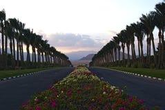花和棕榈树在途中对沙漠 免版税图库摄影