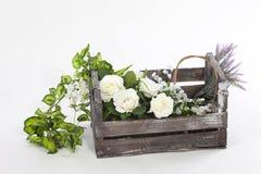 花和植物一个老箱子的 库存照片