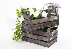 花和植物一个老箱子的 免版税库存图片