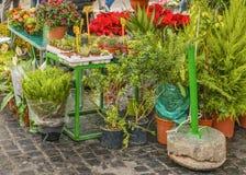 花和植物公平的街道,园地dei Fiori罗马,意大利 免版税库存照片