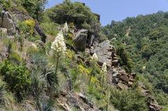 花和植物在美国加州红杉公园 免版税库存图片