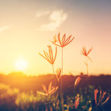 花和植物日落的 免版税库存图片
