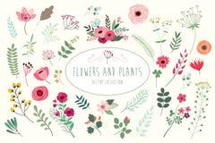 花和植物汇集 免版税图库摄影