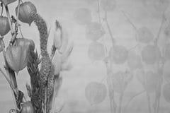 花和植物特写镜头空泡,中国灯笼厂美丽的花束  亚洲样式 库存图片