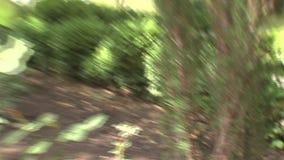 花和植被在别墅附近在保加利亚公园Rosinets 影视素材