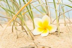 花和海滩草 免版税库存照片