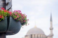 花和清真寺在早晨 免版税库存图片