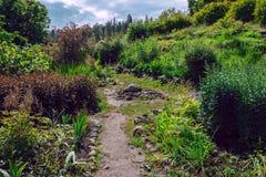花和灌木在石头几乎增长,在Valaam海岛上的肥沃层数非常稀薄是 库存照片