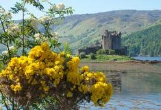 花和爱莲・朵娜城堡 库存图片