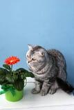 花和猫 免版税库存图片