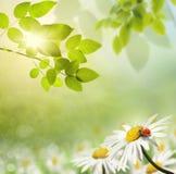 花和瓢虫 免版税库存图片