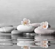 花和石头在灰色背景的禅宗温泉 库存图片