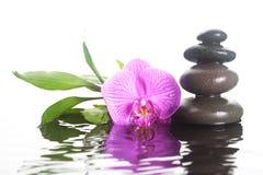 花和石头在水中 库存图片