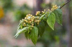 花和绿色叶子 图库摄影