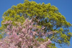 花和绿色树 库存图片