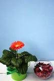 花和花瓶有玫瑰花瓣的 库存照片