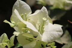 花和芽做框架 免版税库存照片