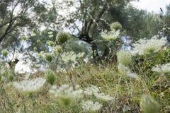 花和芽在领域 免版税图库摄影