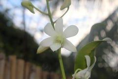 花和芽 库存图片