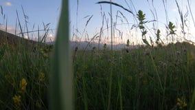 花和草草甸在夏天和比利牛斯山脉的风景在日落,法国 影视素材