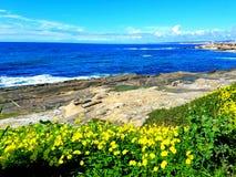 花和蓝色海洋 免版税库存照片