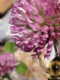 花和蜂汇集#1 库存图片