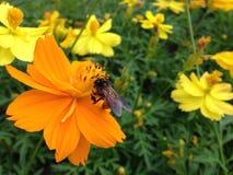 花和蜂 免版税图库摄影