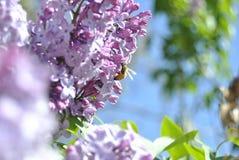 花和蜂 库存照片