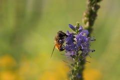 花和蜂 免版税库存图片