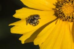花和蜘蛛 免版税库存图片