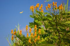 花和蝴蝶背景的 免版税库存图片
